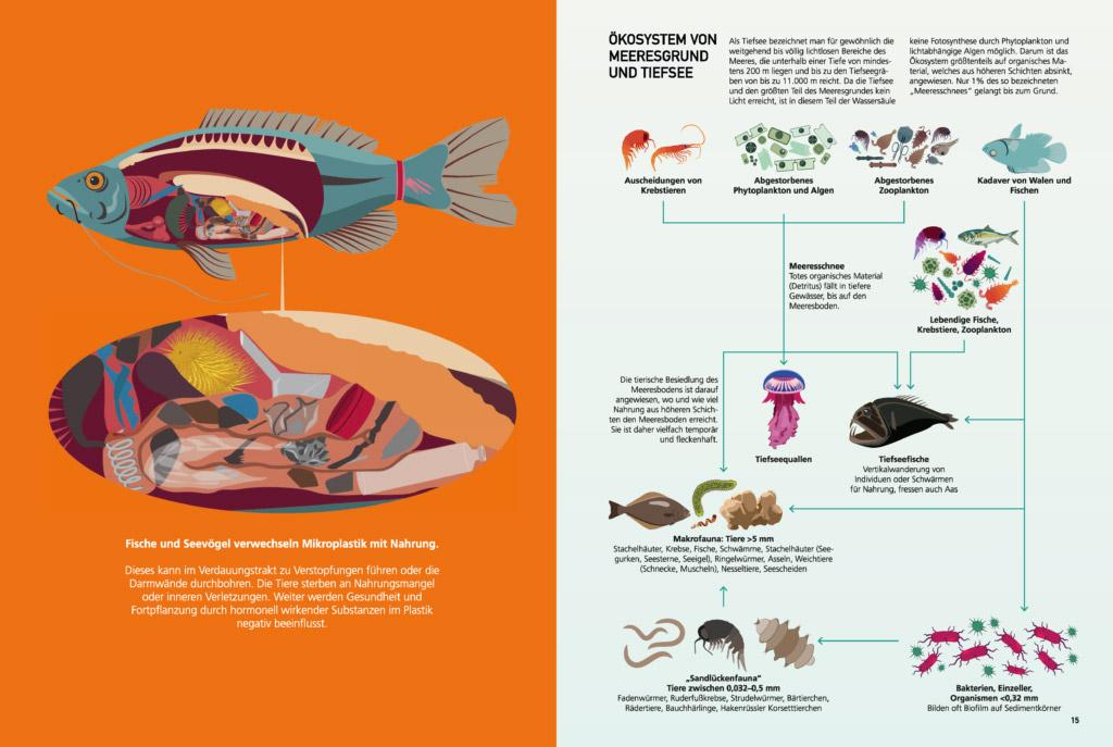 sterling-sonja-bachelorarbeit-gdvk-biodiversitaeat-ozean-10